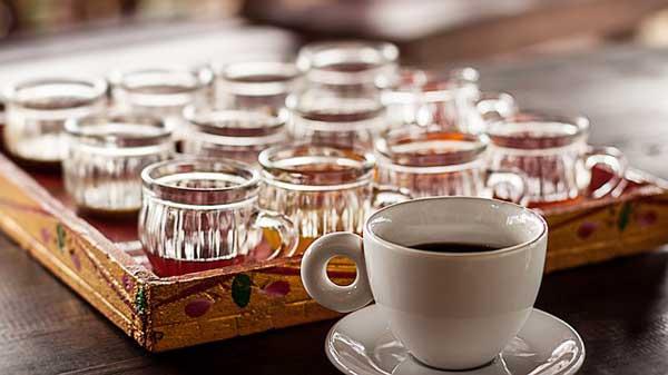 Kopi Luwak Katzenkaffee – der beste Kaffee der Welt?